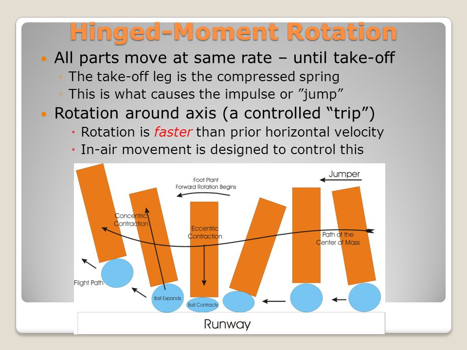 Hinged-Moment Rotation All parts move at same rate – until take-off The take-off leg is the compressed spring This is what causes the impulse or jump