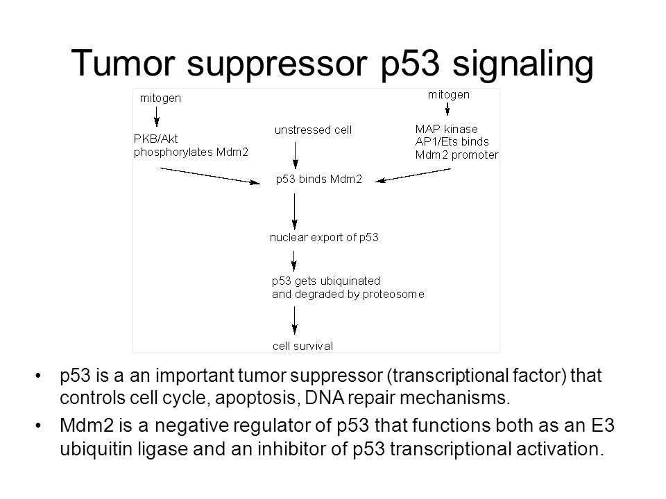 Tumor suppressor p53 signaling p53 is a an important tumor suppressor (transcriptional factor) that controls cell cycle, apoptosis, DNA repair mechani