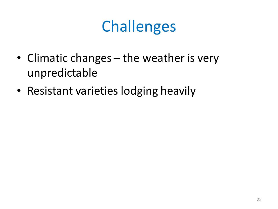 Challenges Climatic changes – the weather is very unpredictable Resistant varieties lodging heavily 25