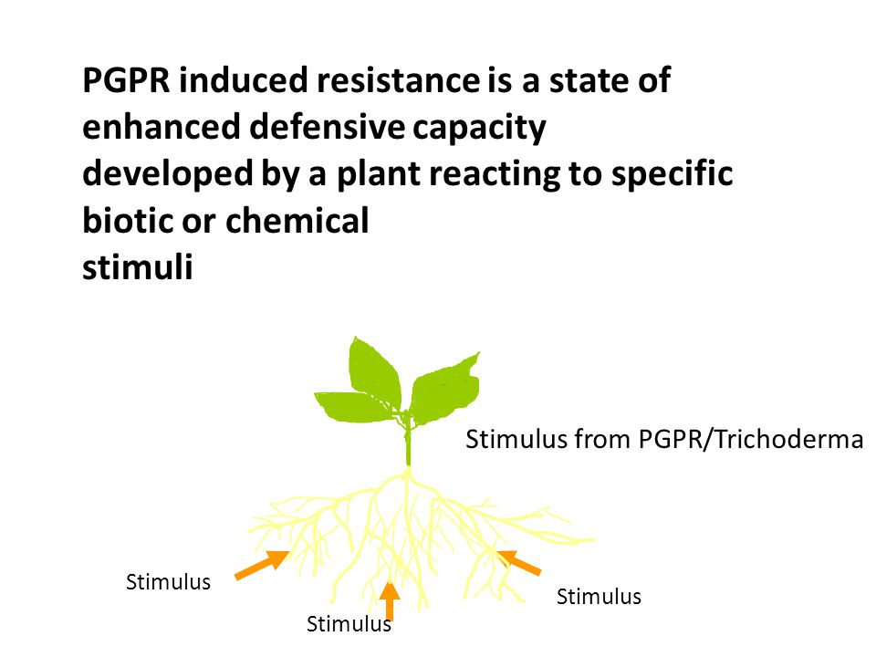 PGPR induced resistance is a state of enhanced defensive capacity developed by a plant reacting to specific biotic or chemical stimuli Stimulus Stimul