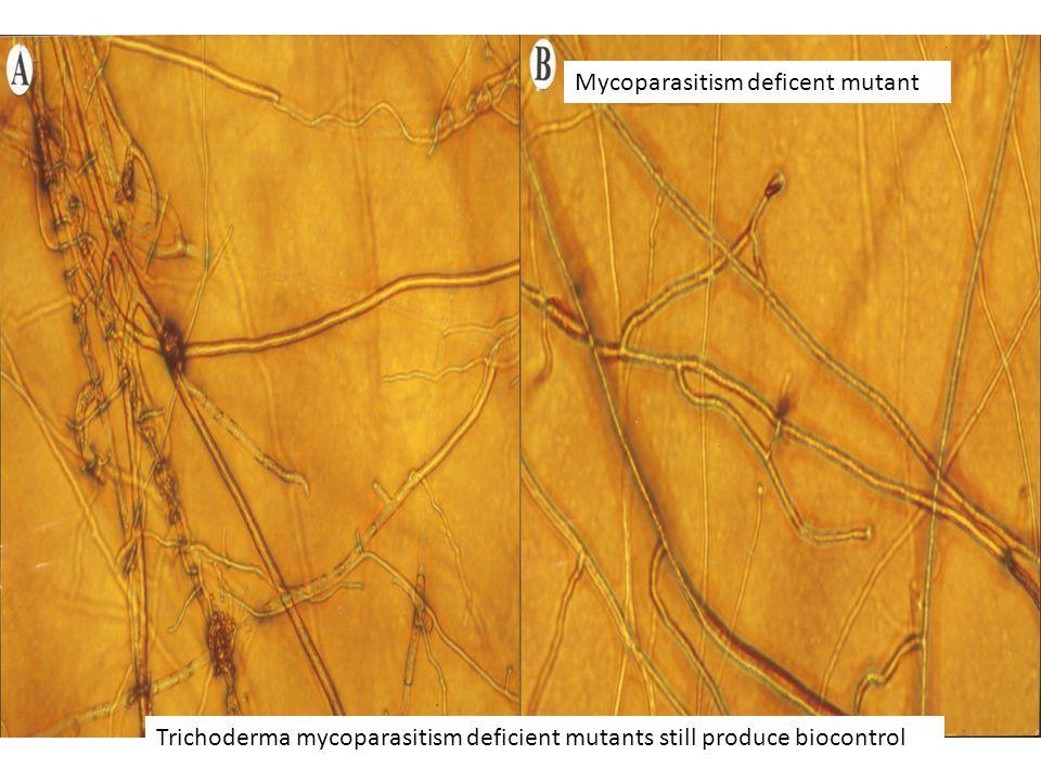 Trichoderma mycoparasitism deficient mutants still produce biocontrol Mycoparasitism deficent mutant