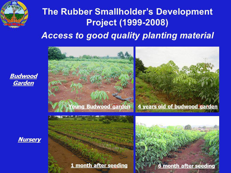 The Rubber Smallholders Development Project (1999-2008) Access to good quality planting material 1 month after seeding 6 month after seeding Young Bud
