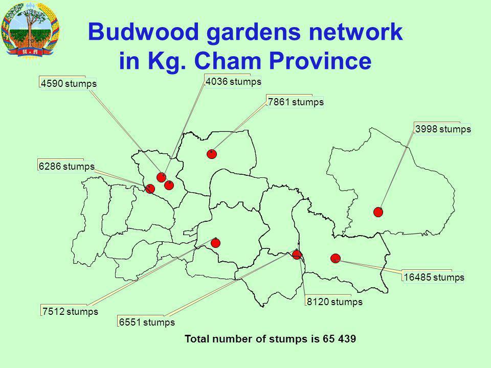 Budwood gardens network in Kg.