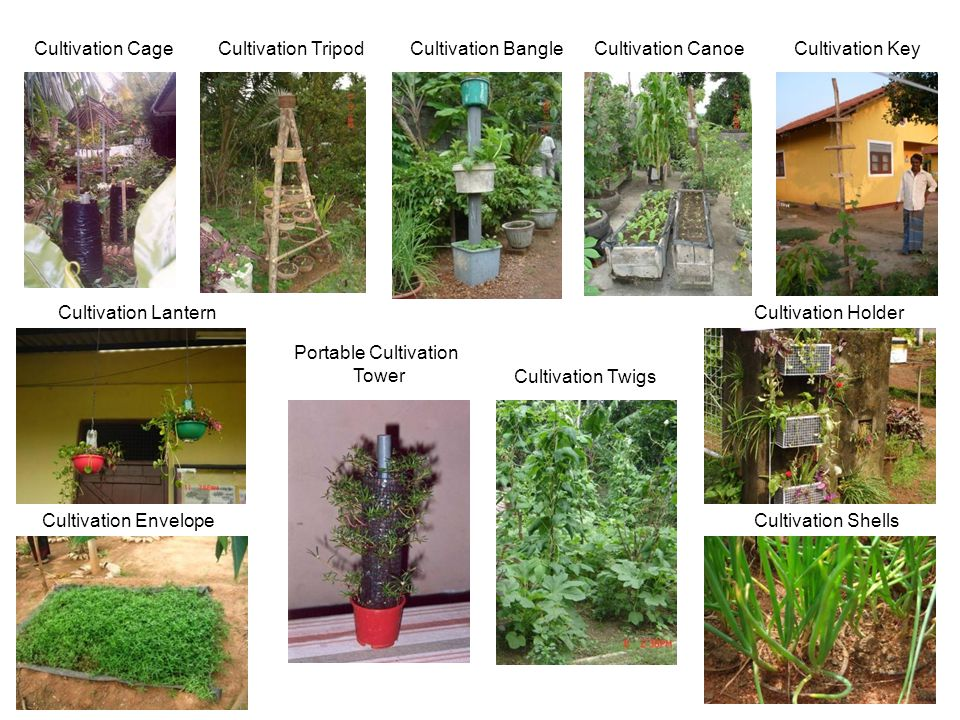 Cultivation CageCultivation TripodCultivation BangleCultivation Canoe Cultivation Lantern Cultivation Envelope Cultivation Twigs Cultivation Key Cultivation Shells l Cultivation Holder Portable Cultivation Tower