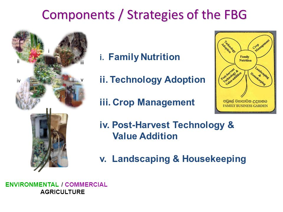 Components / Strategies of the FBG i.Family Nutrition ii.