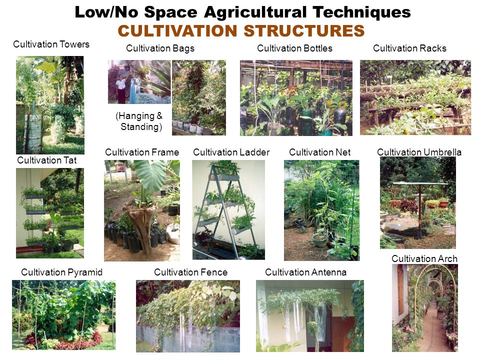 Cultivation Arch Cultivation Bags (Hanging & Standing) Cultivation Tat Cultivation Frame Cultivation Pyramid Cultivation Racks Cultivation Fence Cultivation LadderCultivation Net Cultivation Towers Cultivation Umbrella Cultivation Antenna Low/No Space Agricultural Techniques CULTIVATION STRUCTURES Cultivation Bottles