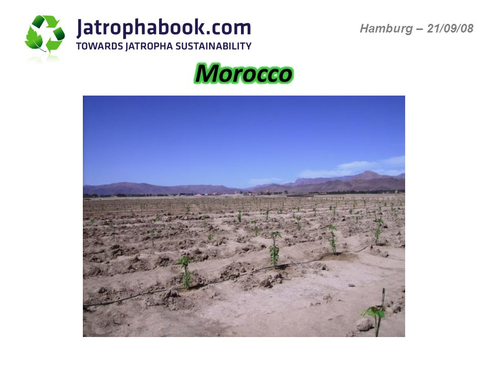MoroccoSenegalGhanaCameroon Land preparation +++ ----- Time for agricultural activities +++++-- Availability of materials, construction +++-- Phytophatology (Fungi) +++-- Fertilizing +++-- Manpower (availability, efficiency) ++-- Skilled manpower +-+- Insects ---+++ Nursering ---++ Cost of manpower ---+++ Climatic conditions ---+++++ Irrigation needs -----++++ Hamburg – 21/09/08