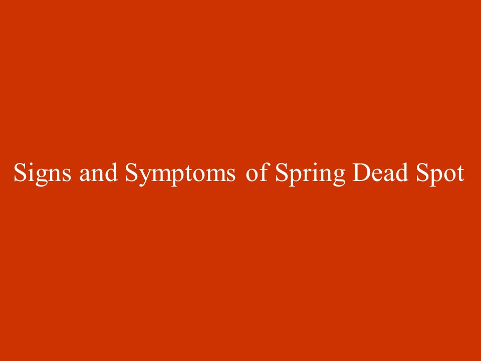 Signs and Symptoms of Spring Dead Spot