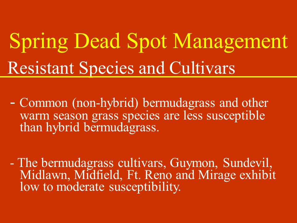 Resistant Species and Cultivars - Common (non-hybrid) bermudagrass and other warm season grass species are less susceptible than hybrid bermudagrass.