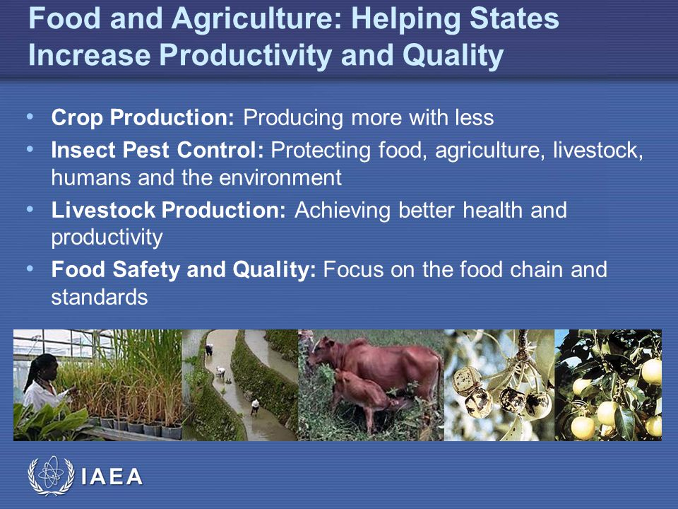 IAEA Food and Agriculture: Helping States Increase Productivity and Quality Crop Production: Producing more with less Insect Pest Control: Protecting food, agriculture, livestock, humans and the environment Livestock Production: Achieving better health and productivity Food Safety and Quality: Focus on the food chain and standards