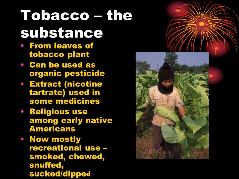 Tobacco – the substance From leaves of tobacco plant Can be used as organic pesticide Extract (nicotine tartrate) used in some medicines Religious use among early native Americans Now mostly recreational use – smoked, chewed, snuffed, sucked/dippe d