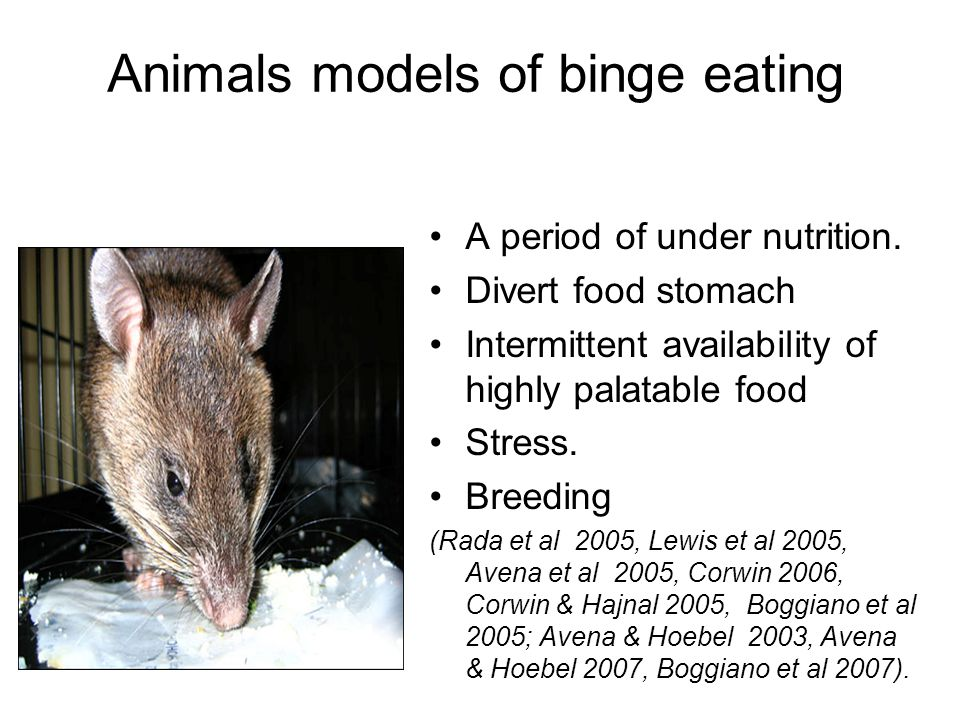 Animals models of binge eating A period of under nutrition. Divert food stomach Intermittent availability of highly palatable food Stress. Breeding (R