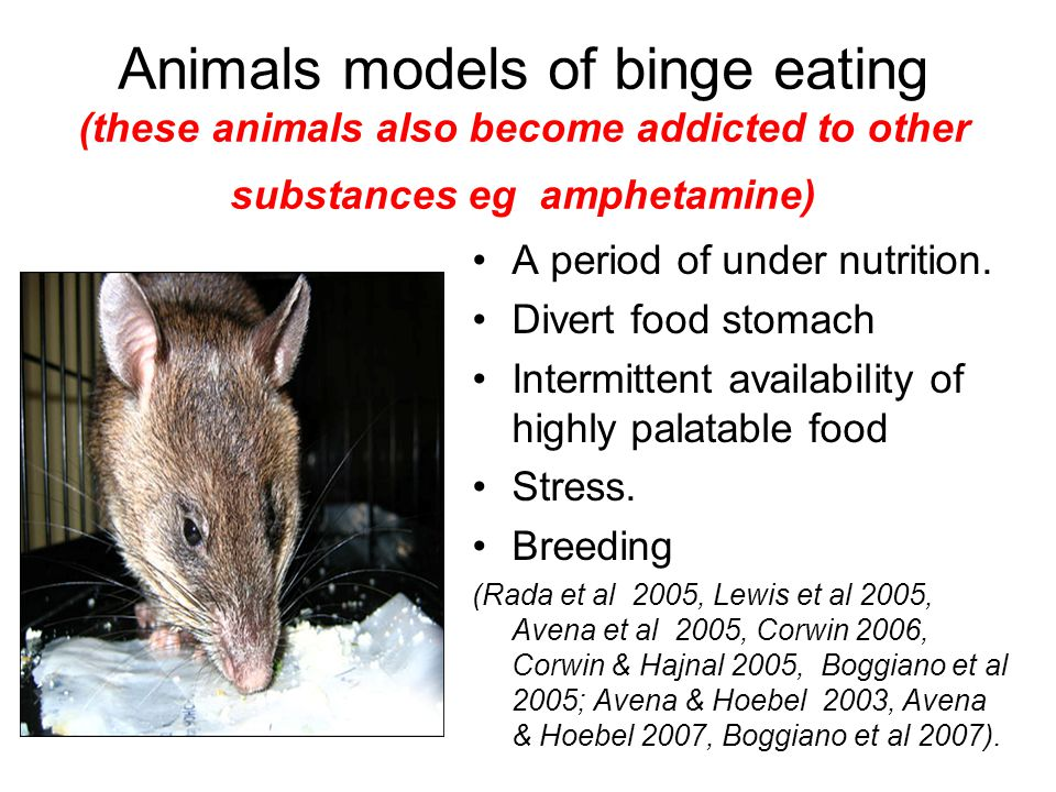 Animals models of binge eating (these animals also become addicted to other substances eg amphetamine) A period of under nutrition. Divert food stomac