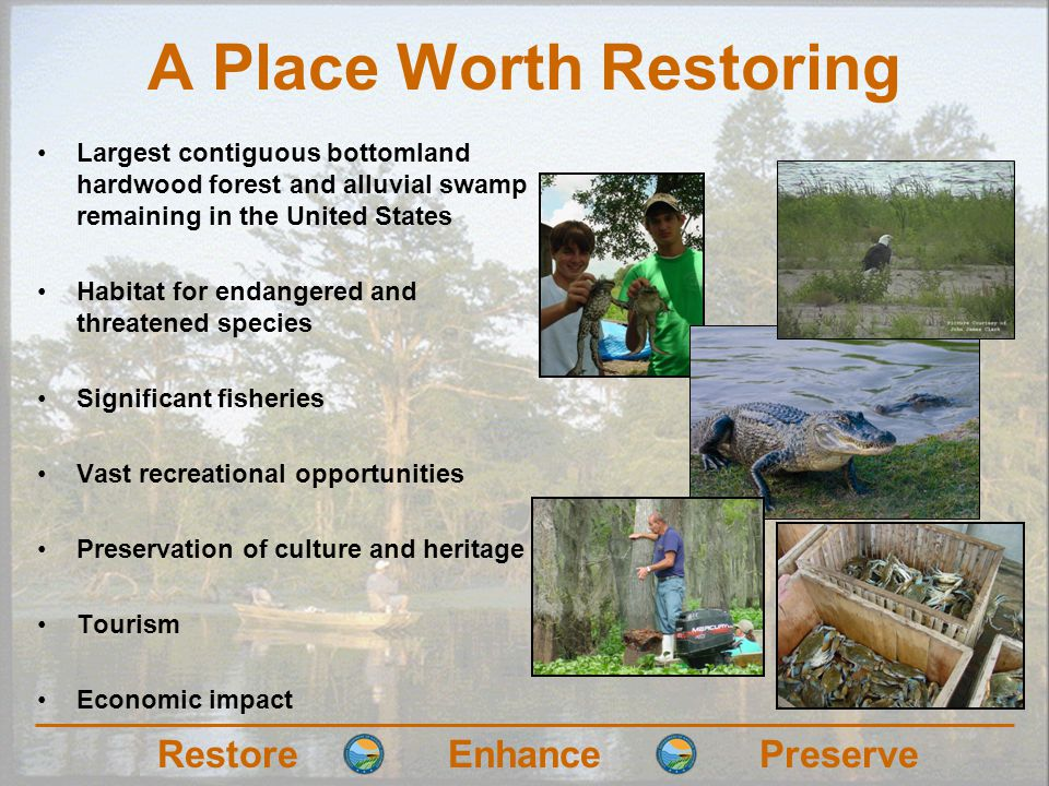 RestoreEnhancePreserve A Place Worth Restoring Largest contiguous bottomland hardwood forest and alluvial swamp remaining in the United States Habitat for endangered and threatened species Significant fisheries Vast recreational opportunities Preservation of culture and heritage Tourism Economic impact