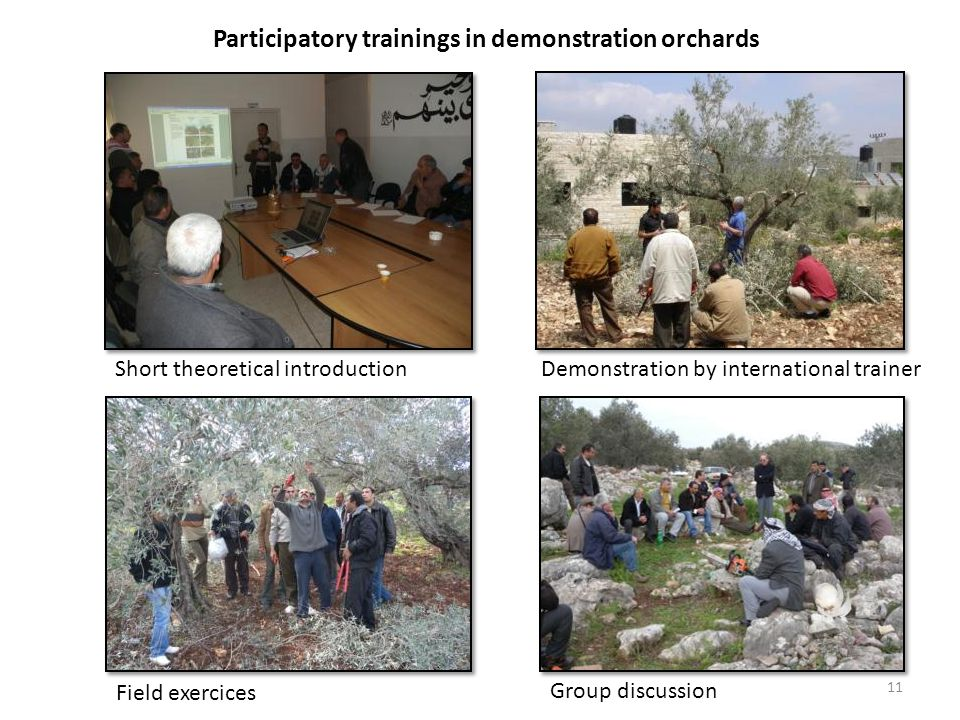 Participatory trainings in demonstration orchards Short theoretical introductionDemonstration by international trainer Field exercices Group discussion 11