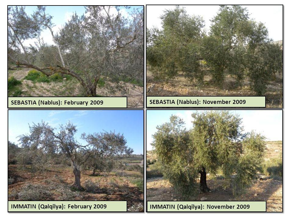 SEBASTIA (Nablus): February 2009 SEBASTIA (Nablus): November 2009 IMMATIN (Qalqilya): February 2009 IMMATIN (Qalqilya): November 2009 13