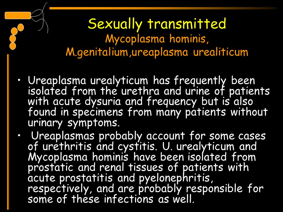 Sexually transmitted Mycoplasma hominis, M.genitalium,ureaplasma urealiticum Ureaplasma urealyticum has frequently been isolated from the urethra and
