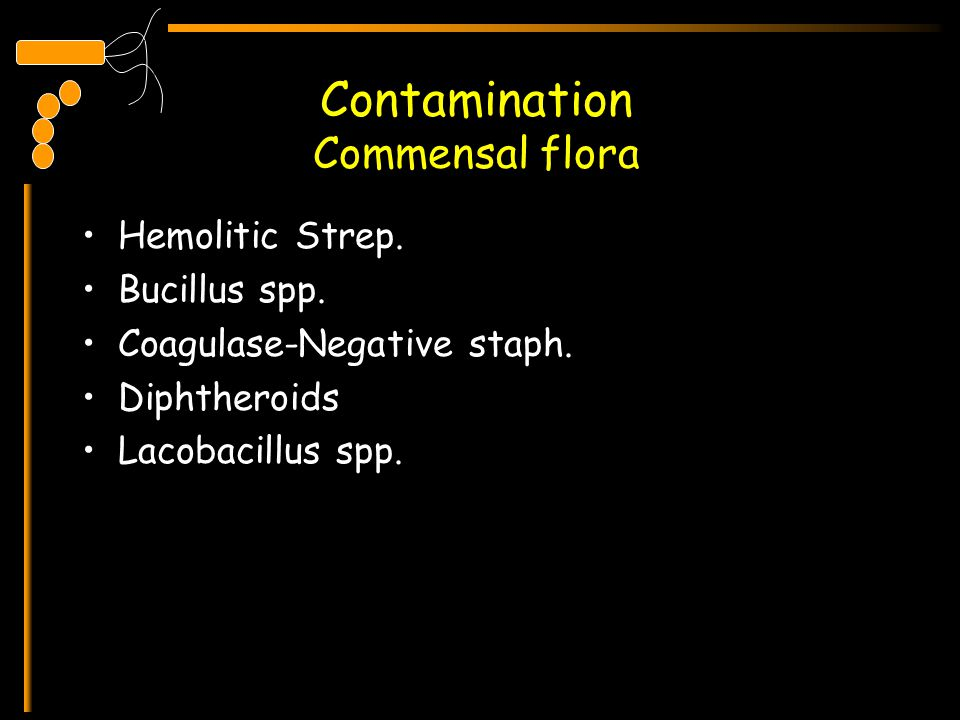 Contamination Commensal flora Hemolitic Strep. Bucillus spp. Coagulase-Negative staph. Diphtheroids Lacobacillus spp.