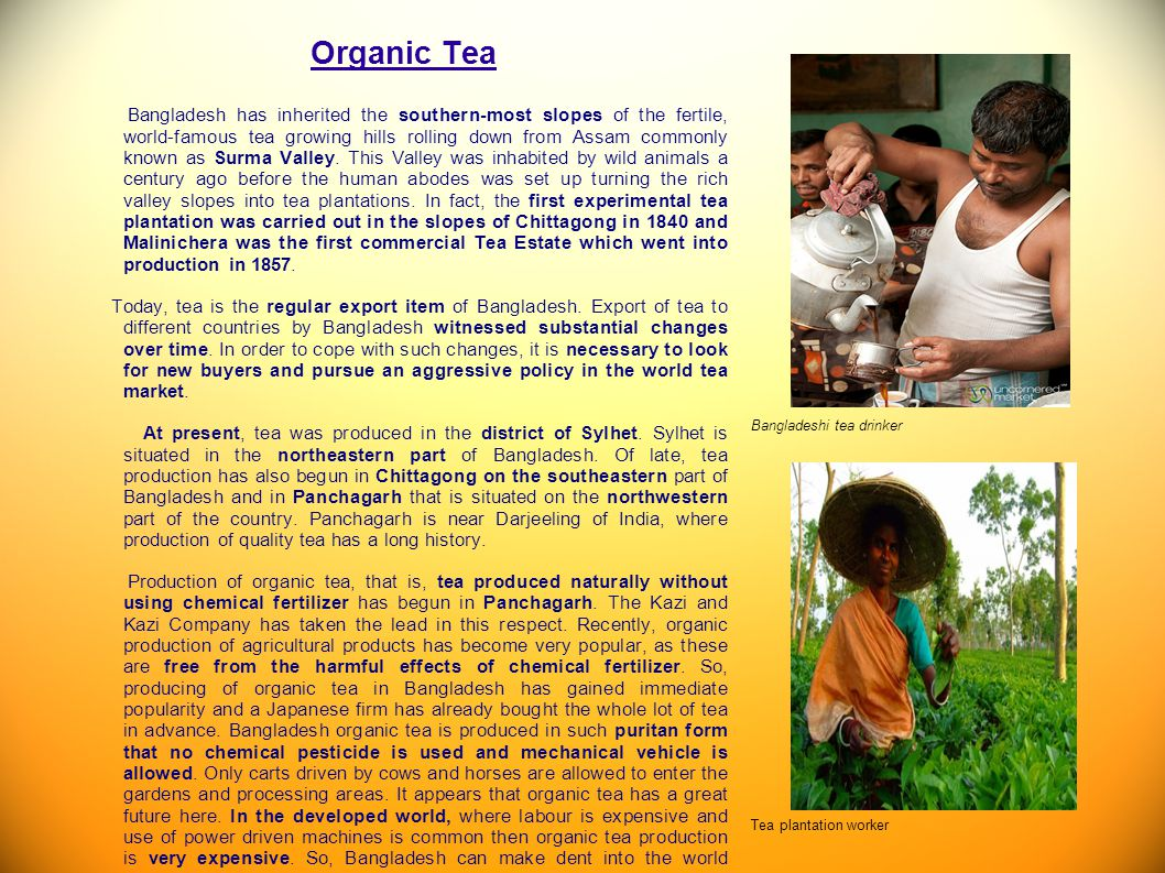 Organic Tea Bangladesh has inherited the southern-most slopes of the fertile, world-famous tea growing hills rolling down from Assam commonly known as