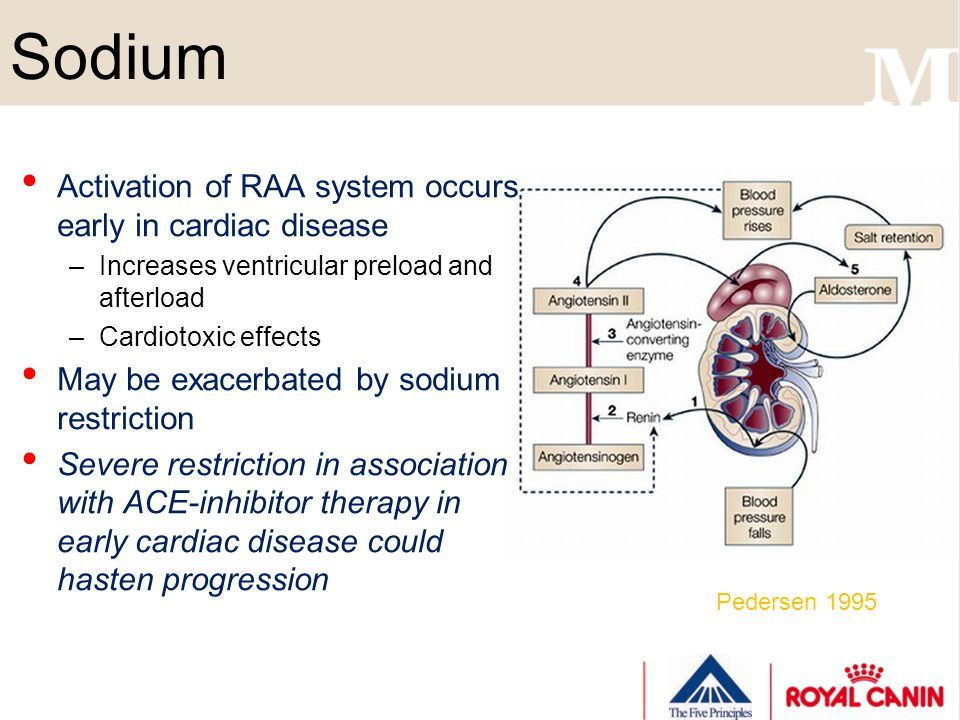 Sodium Activation of RAA system occurs early in cardiac disease –Increases ventricular preload and afterload –Cardiotoxic effects May be exacerbated b