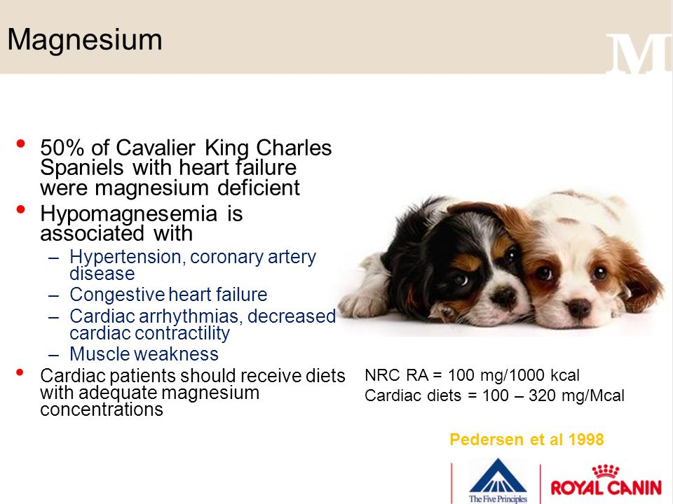 Magnesium 50% of Cavalier King Charles Spaniels with heart failure were magnesium deficient Hypomagnesemia is associated with –Hypertension, coronary