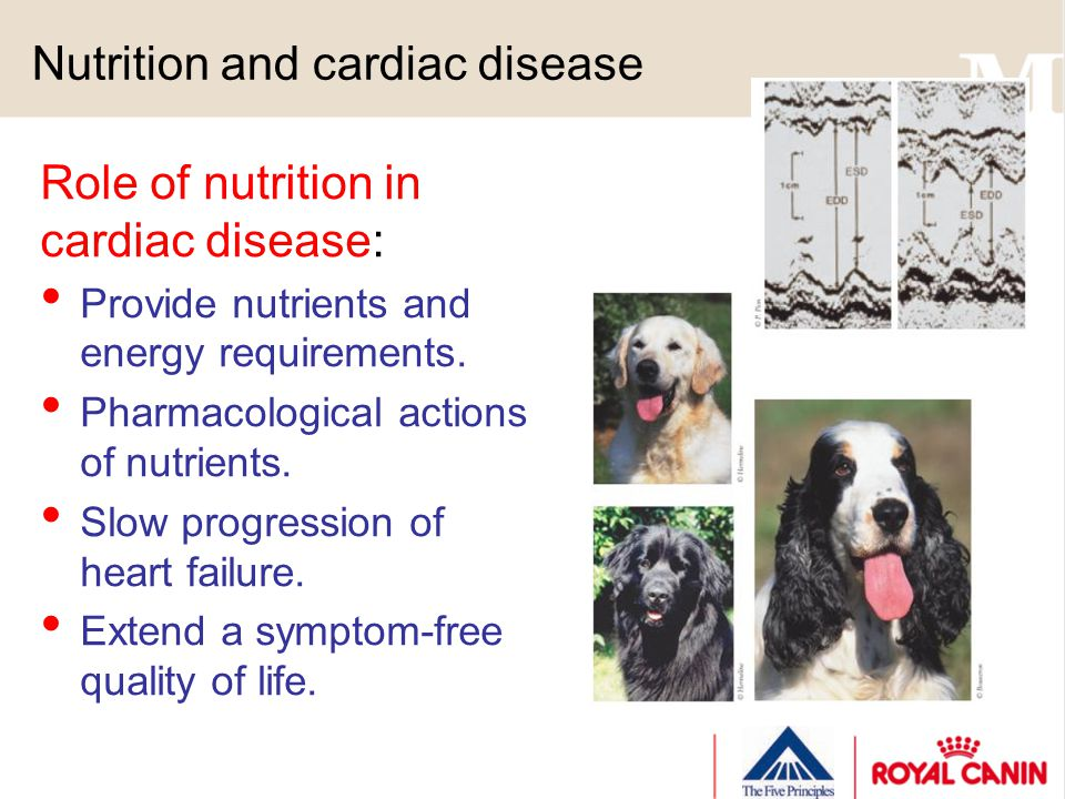 Nutrition and cardiac disease Role of nutrition in cardiac disease: Provide nutrients and energy requirements. Pharmacological actions of nutrients. S