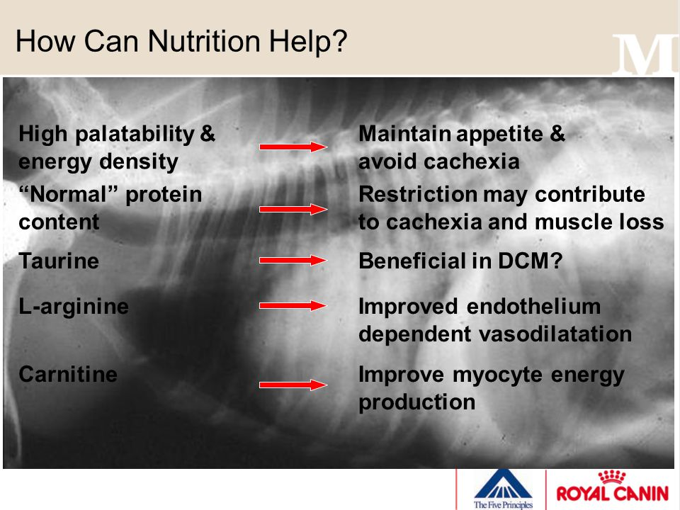 How Can Nutrition Help? High palatability &Maintain appetite & energy densityavoid cachexia Normal proteinRestriction may contribute contentto cachexi