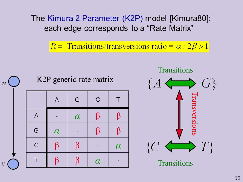 10 The Kimura 2 Parameter (K2P) model [Kimura80]: each edge corresponds to a Rate Matrix Transitions Transversions Transitions K2P generic rate matrix u v