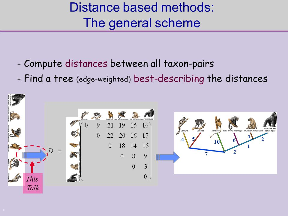 . - Compute distances between all taxon-pairs - Find a tree (edge-weighted) best-describing the distances Distance based methods: The general scheme 4 5 7 2 1 2 10 6 1 This Talk