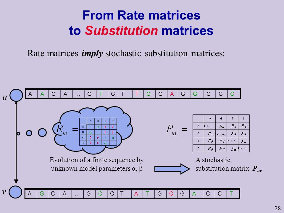 28 From Rate matrices to Substitution matrices AACA…GTCTTCGAGGCCC u v AGCA…GCCTATGCGACCT Rate matrices imply stochastic substitution matrices: Evolution of a finite sequence by unknown model parameters α, β A stochastic substitution matrix P uv