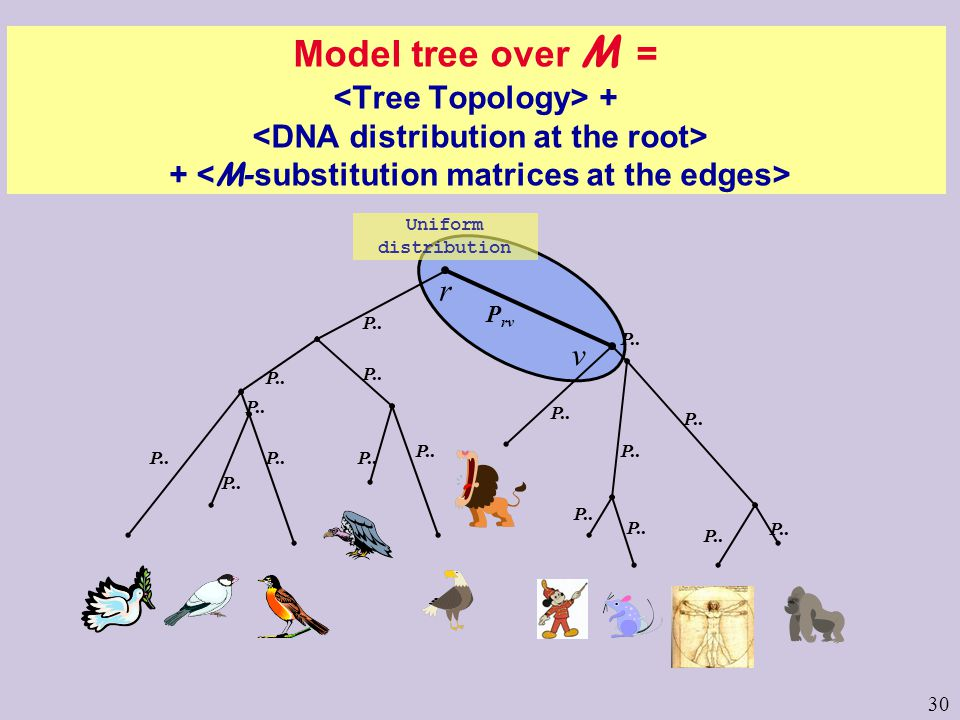 30 Uniform distribution Model tree over M = + + r v P rv P..