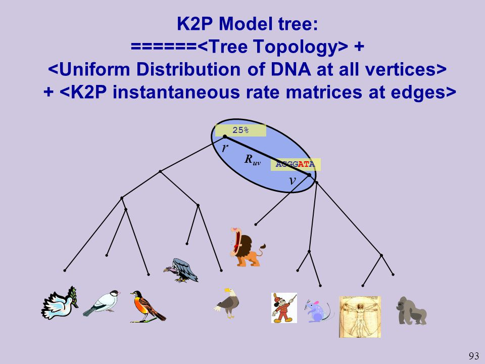 93 25% ACGGATA K2P Model tree: ====== + + r v R uv