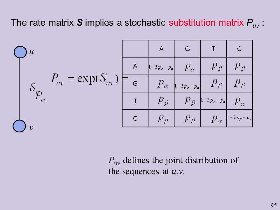 95 The rate matrix S implies a stochastic substitution matrix P uv : u v P uv defines the joint distribution of the sequences at u,v.