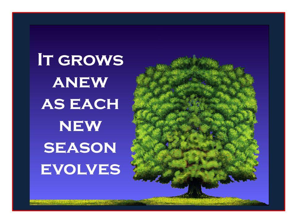 as sure as the oak sheds its leaves each season