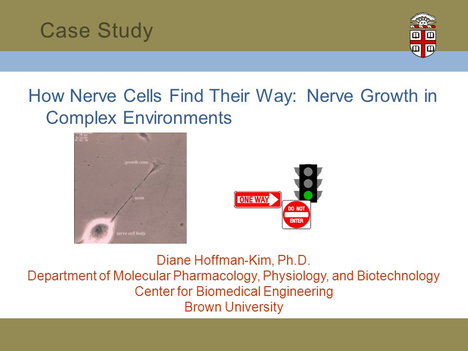 How Nerve Cells Find Their Way: Nerve Growth in Complex Environments Case Study Diane Hoffman-Kim, Ph.D.