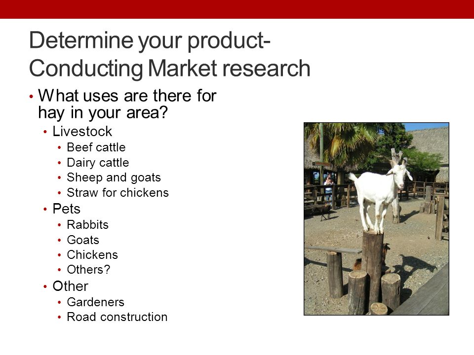 Determine your product- Conducting Market research What uses are there for hay in your area.