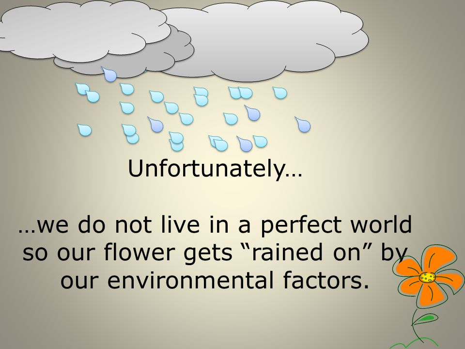 Unfortunately… …we do not live in a perfect world so our flower gets rained on by our environmental factors.