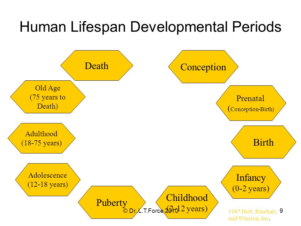 9 Human Lifespan Developmental Periods Conception Prenatal ( Conception-Birth) Infancy (0-2 years) Birth Childhood (2-12 years) Puberty Adolescence (12-18 years) Adulthood (18-75 years) Old Age (75 years to Death) Death 1987 Holt, Rinehart, and Winston, Inc.
