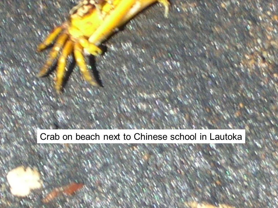 Crab on beach next to Chinese school in Lautoka