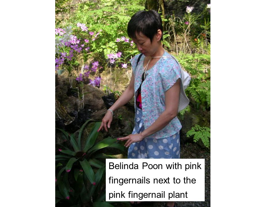 Belinda Poon with pink fingernails next to the pink fingernail plant
