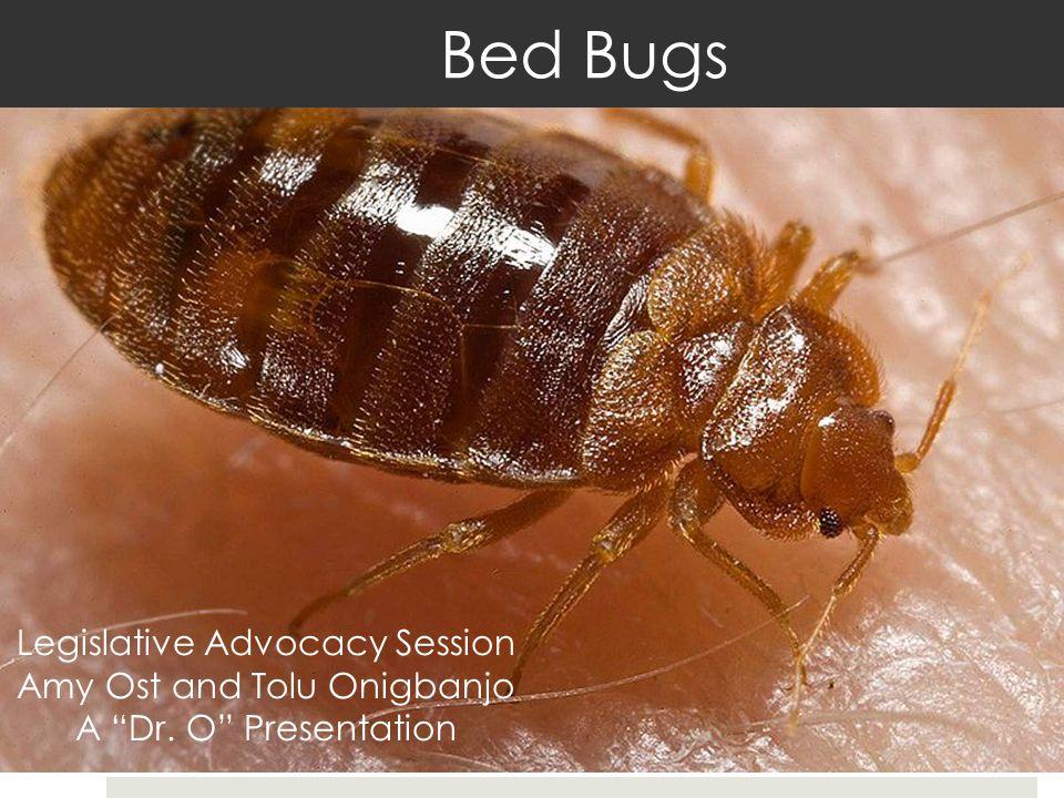 Legislative Advocacy Session Amy Ost and Tolu Onigbanjo A Dr. O Presentation Bed Bugs