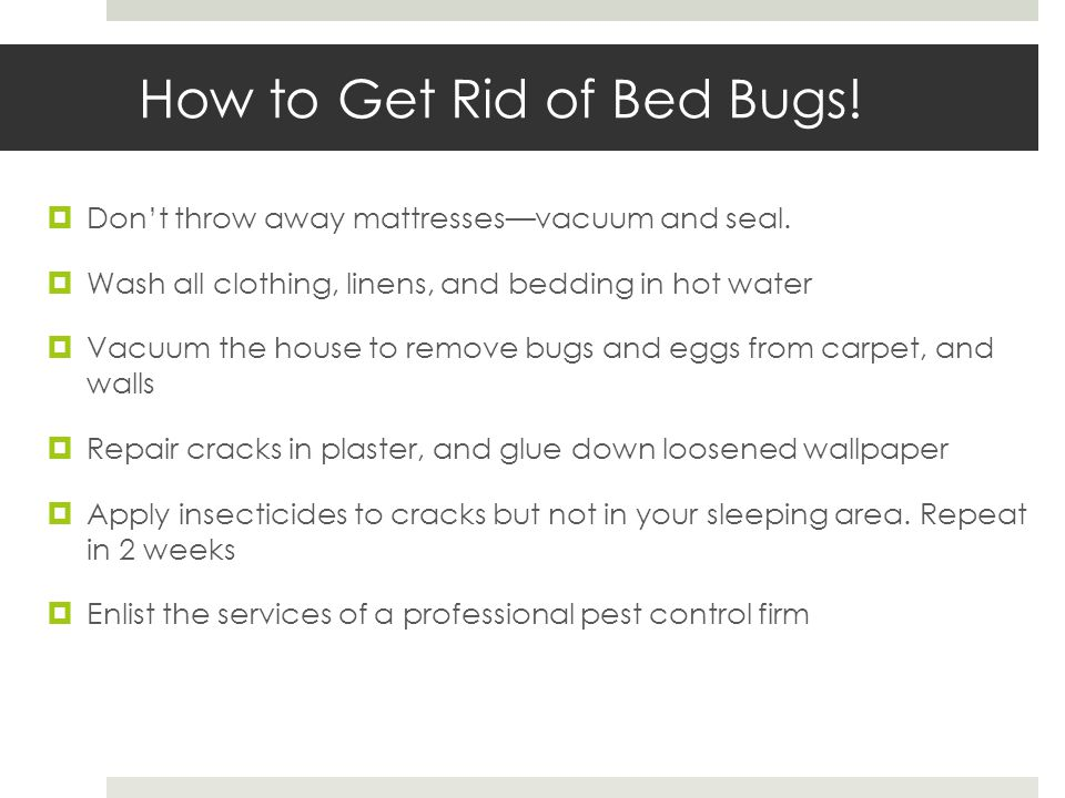 How to Get Rid of Bed Bugs. Dont throw away mattressesvacuum and seal.