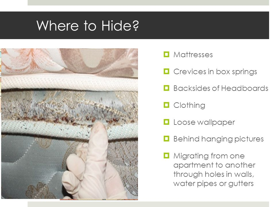Where to Hide.