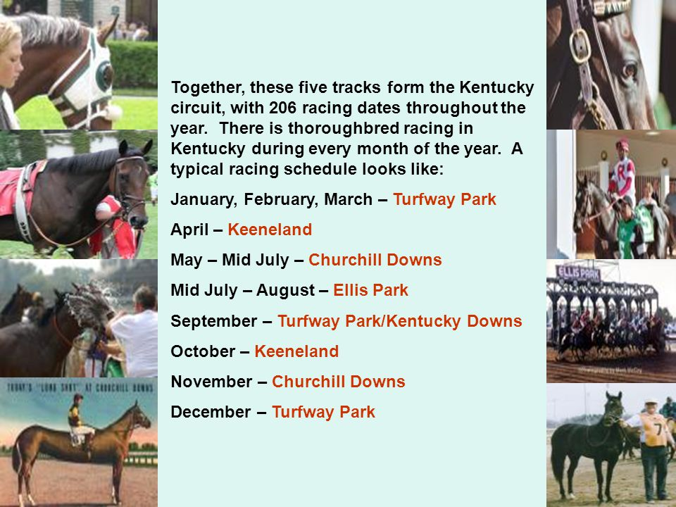 Together, these five tracks form the Kentucky circuit, with 206 racing dates throughout the year.