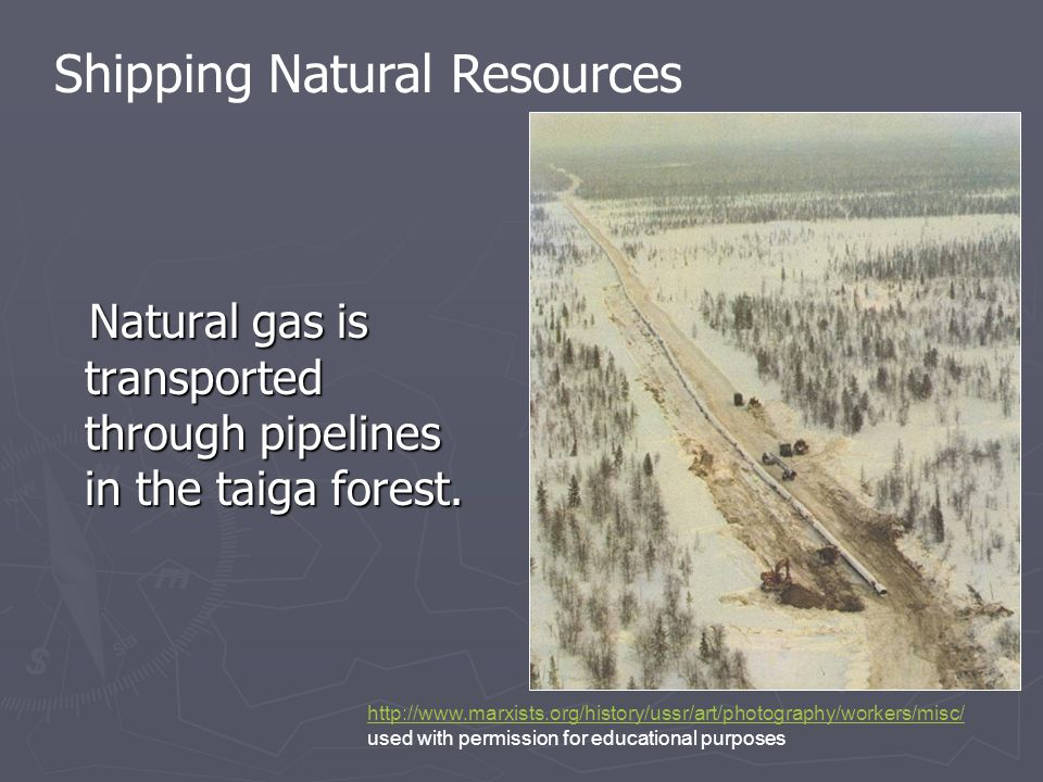 Natural gas is transported through pipelines in the taiga forest. Natural gas is transported through pipelines in the taiga forest. http://www.marxist