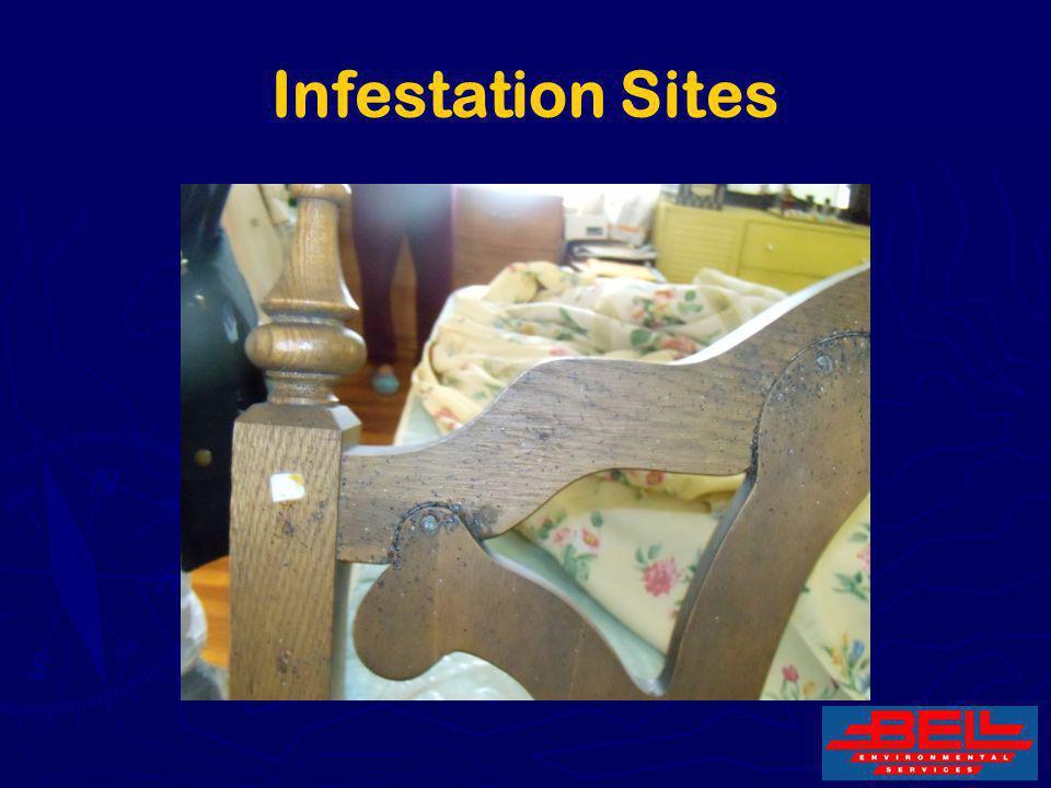 23 Infestation Sites