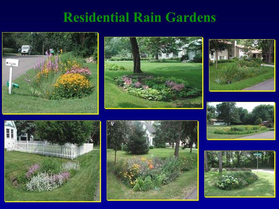 Residential Rain Gardens