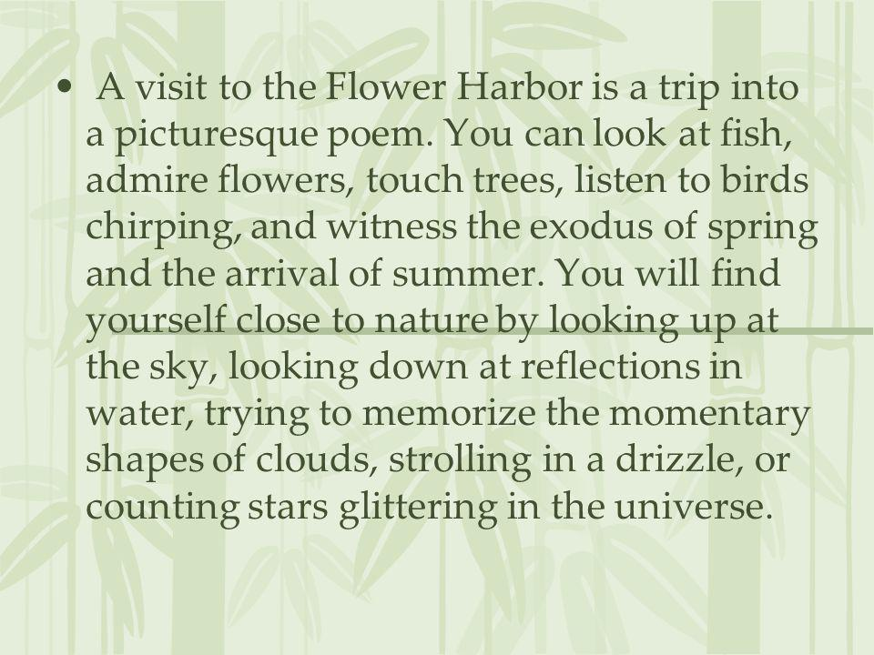 A visit to the Flower Harbor is a trip into a picturesque poem. You can look at fish, admire flowers, touch trees, listen to birds chirping, and witne