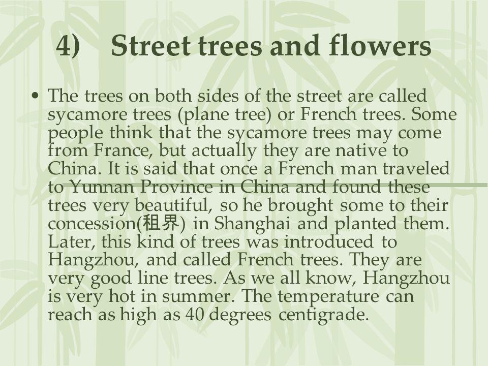 4) Street trees and flowers The trees on both sides of the street are called sycamore trees (plane tree) or French trees. Some people think that the s