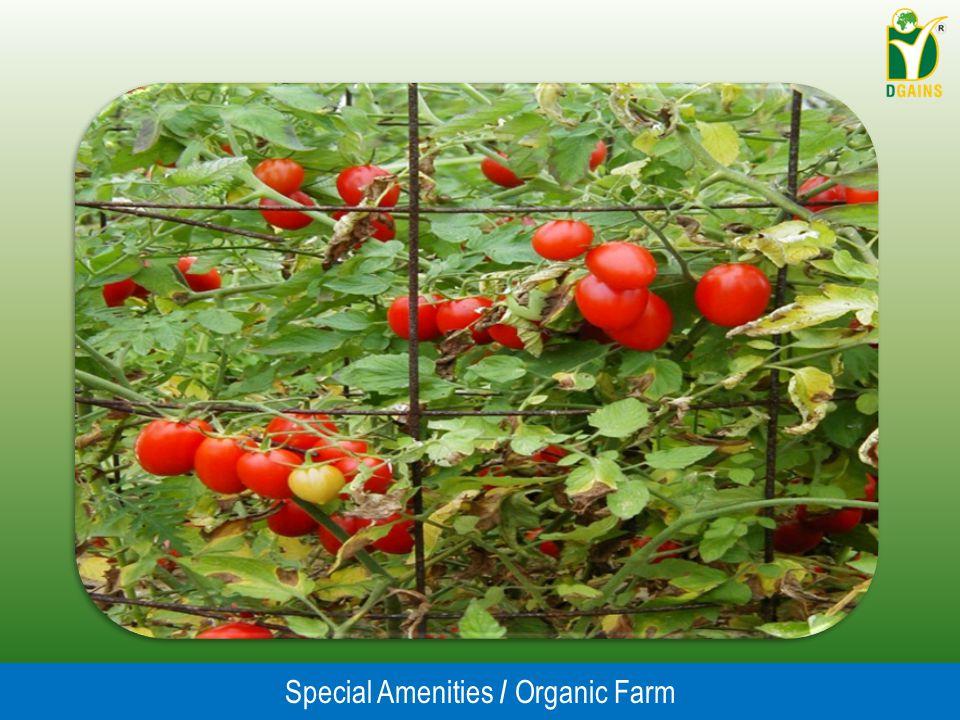 Special Amenities / Organic Farm